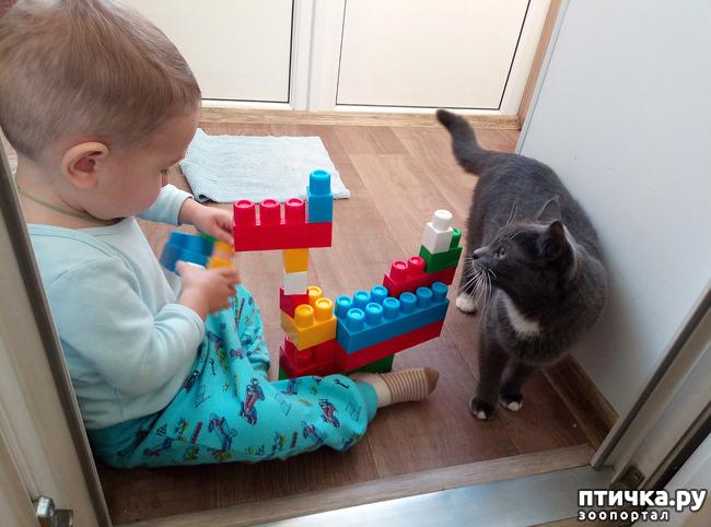 фото 3: Давай поиграем!