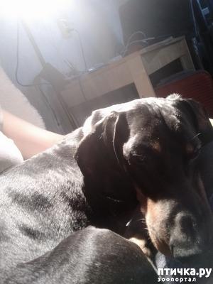 фото: Великое собачье противостояние или Хочу на ручки!
