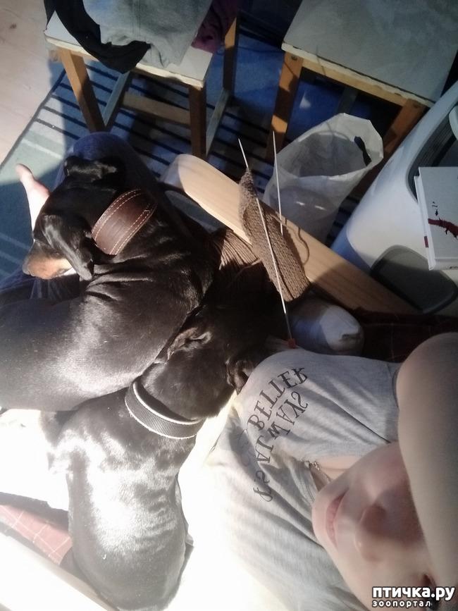 фото 5: Великое собачье противостояние или Хочу на ручки!
