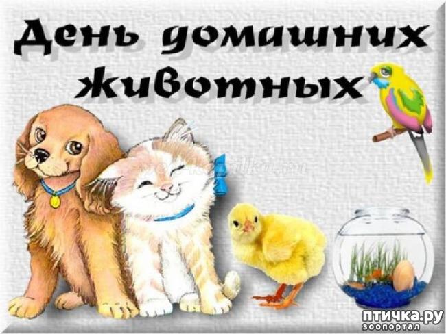фото 1: День домашних животных