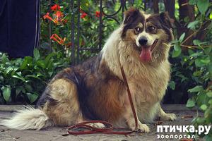фото: Сколько может терпеть собака?