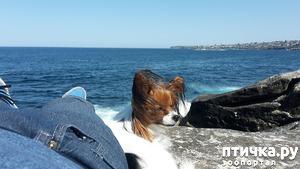 """фото: На пляжУ, пляжУ, пляжУ, Загораю я и с """"папою""""ляжУ..."""
