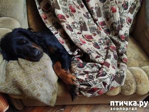 фото: А мы такие отдыхаем. Дубль два.