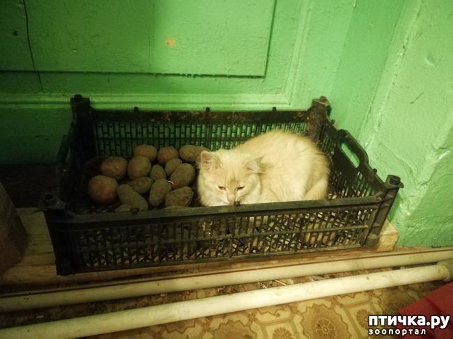 фото 2: Котята продолжают осваивать территорию