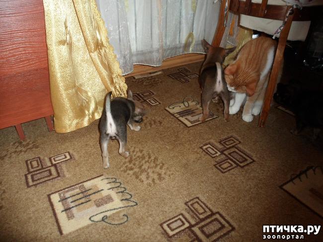 фото 16: Оформились кабачатки))