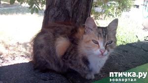 фото: Новости про кошку с остановки