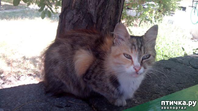 фото 1: Новости про кошку с остановки