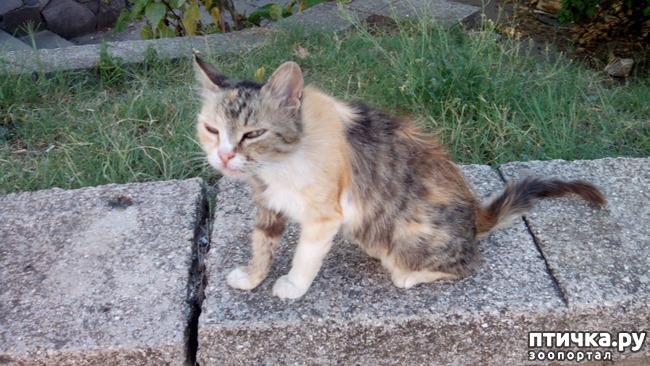 фото 2: Новости про кошку с остановки