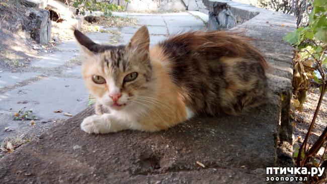 фото 3: Новости про кошку с остановки