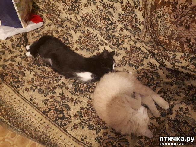 фото 1: Котята продолжают осваивать территорию