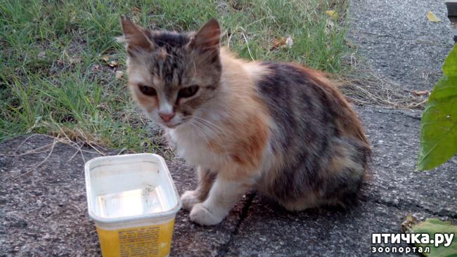 фото 4: Новости про кошку с остановки