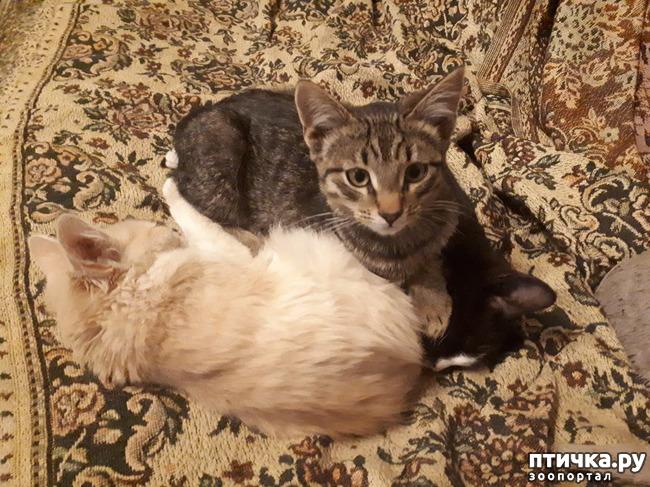 фото 3: Котята продолжают осваивать территорию