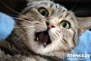 фото: Стресс у кошки