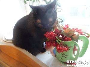 фото: Осенний букетик для... кошки)