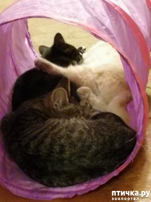 фото: Игры котят