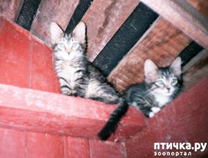 фото: Котята садовые