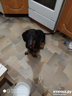 """фото: Что делать, если собака """"забывает"""" отработанные команды"""