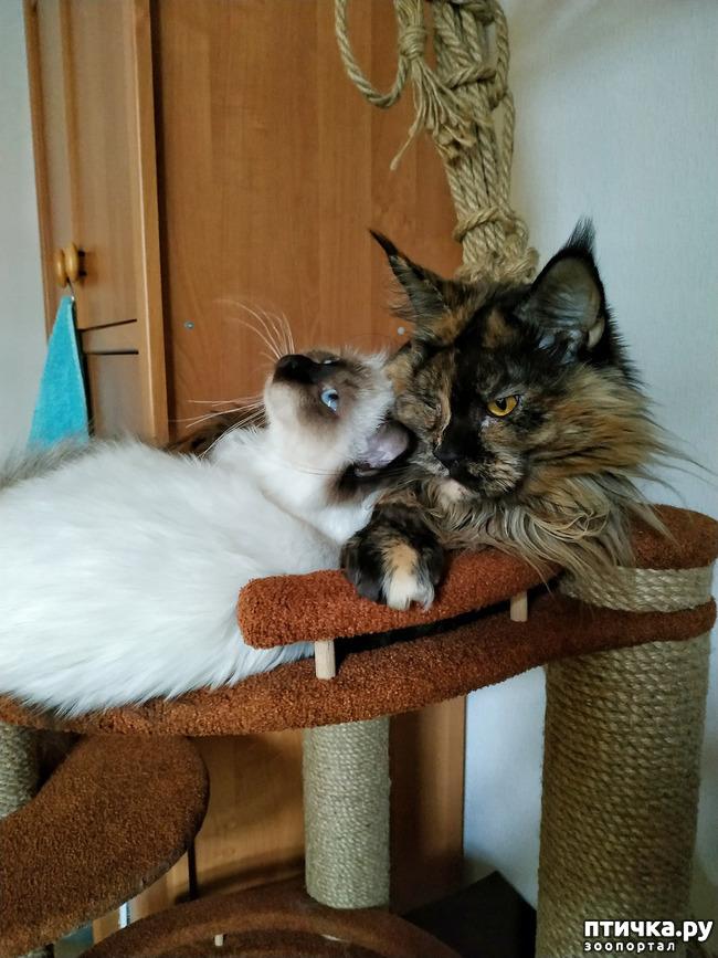 фото 4: ИНЬ и ЯНЬ