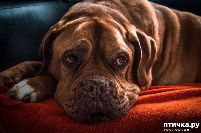 фото 3: Артрит у собак.