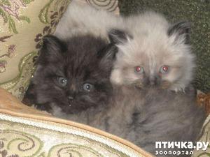 фото: История Казимира