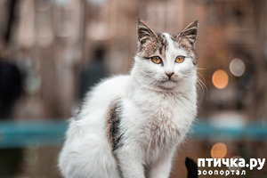 фото: Кошки на улице