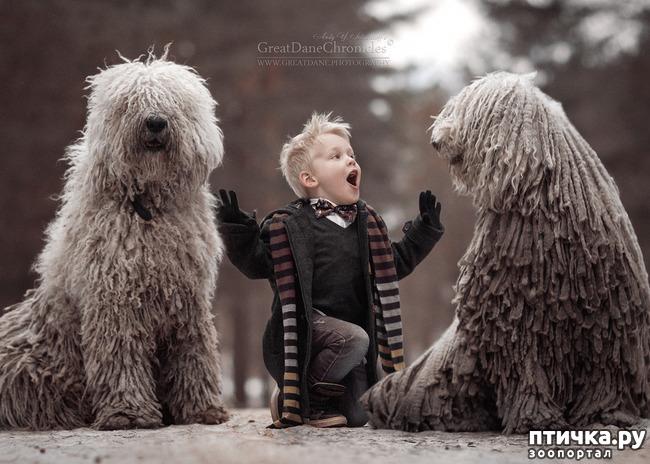 фото 5: Комондор - собака, которой идут дреды.