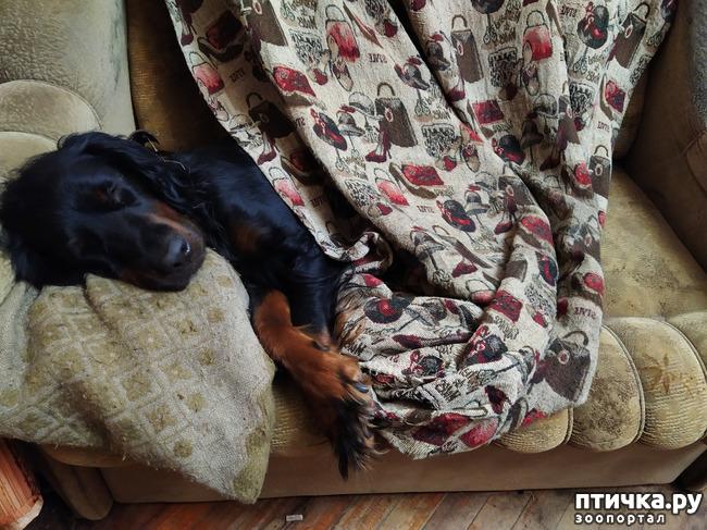фото 4: Баю- бабушки, баю...