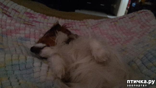 фото 1: Руми спит, она устала,