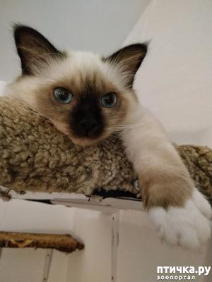 фото: Кот в мешке
