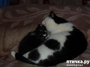 фото: Втекание в корзинку))). Коты это жидкость!