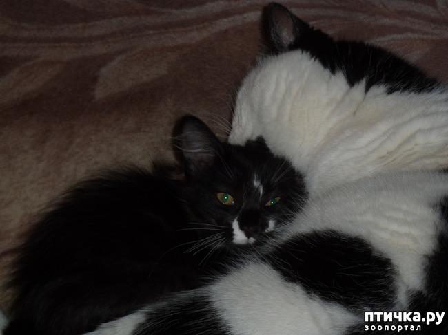 фото 2: Втекание в корзинку))). Коты это жидкость!