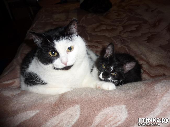 фото 4: Втекание в корзинку))). Коты это жидкость!