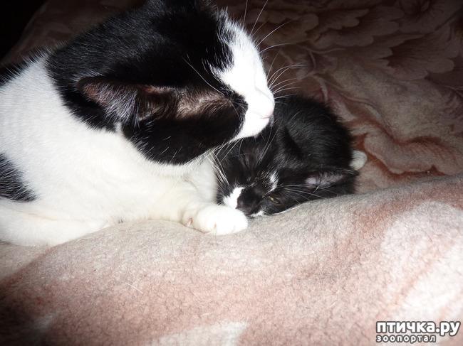 фото 3: Втекание в корзинку))). Коты это жидкость!