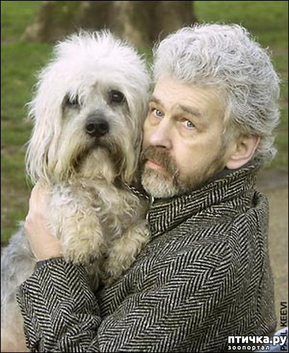 фото 3: Интересные факты о собаках