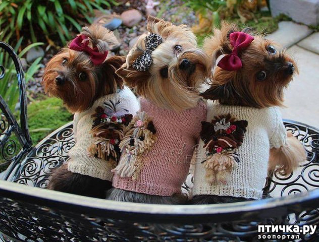 фото 6: Интересные факты о собаках