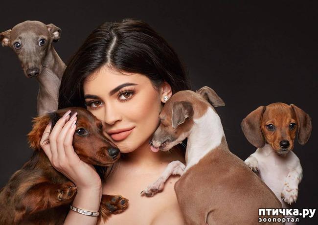 фото 8: Интересные факты о собаках