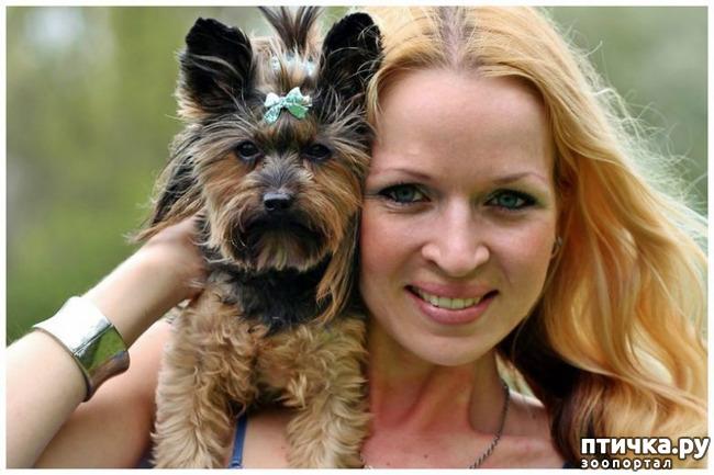 фото 9: Интересные факты о собаках