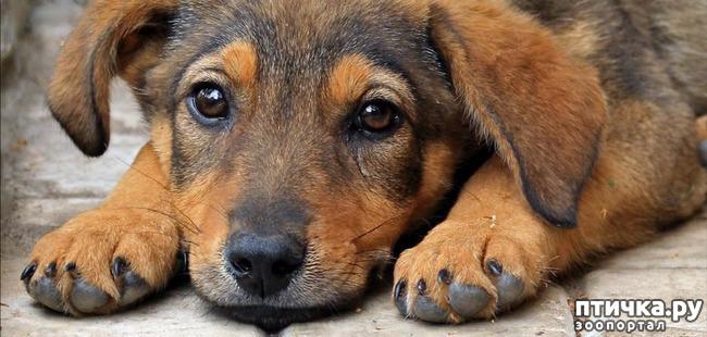 фото 1: Интересные факты о собаках