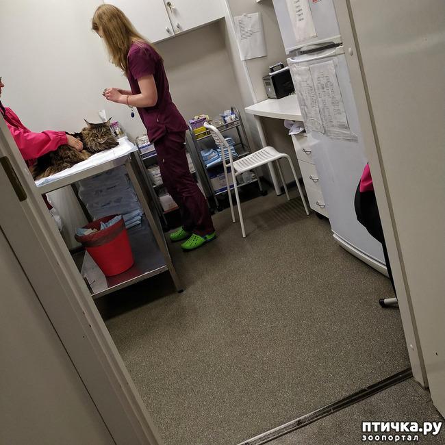 фото 2: Шелла заболела...