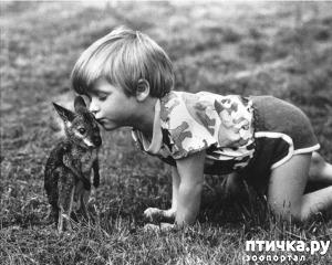 фото: Дети и животные в объективе Джона Дрисдейла