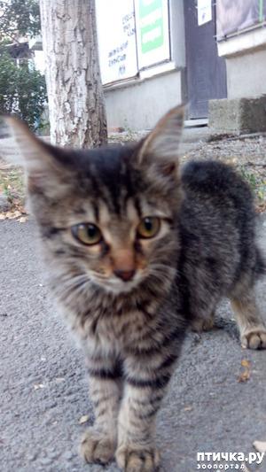 фото: Хорошие кошачьи новости