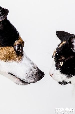 фото: Глистогоним собак и кошек