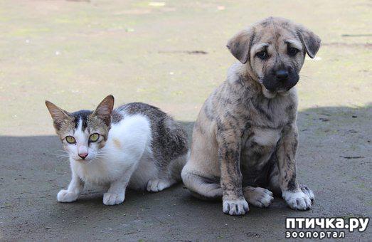 фото 2: Глистогоним собак и кошек
