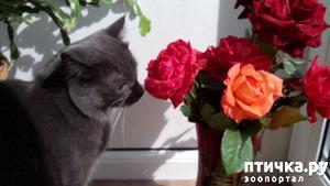 фото: Любитель цветочков