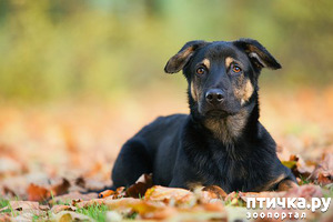 фото: Забытые собаки