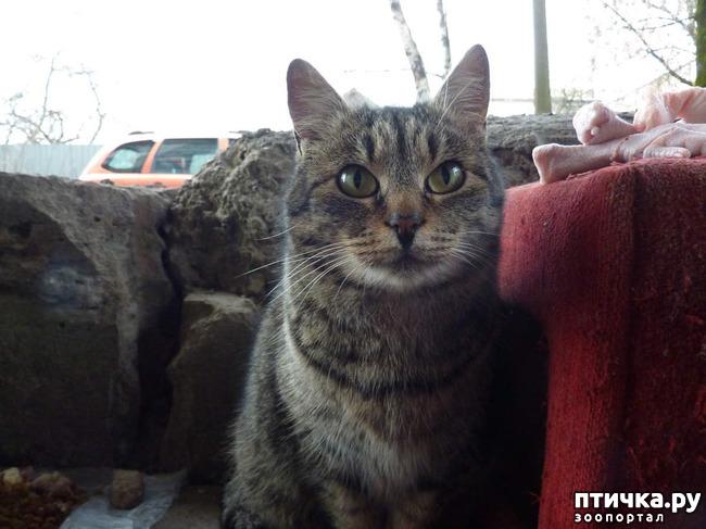 фото 2: КАК Я ПРОВЕЛА ЛЕТО или помощь кошке Снежке