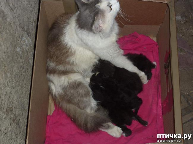 фото 3: КАК Я ПРОВЕЛА ЛЕТО или помощь кошке Снежке