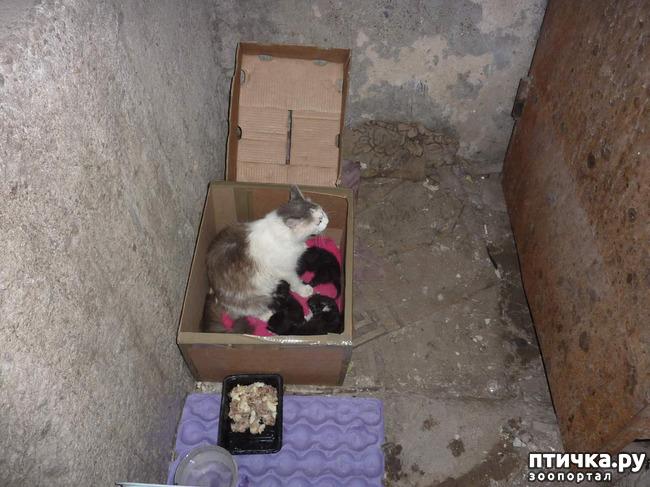 фото 4: КАК Я ПРОВЕЛА ЛЕТО или помощь кошке Снежке