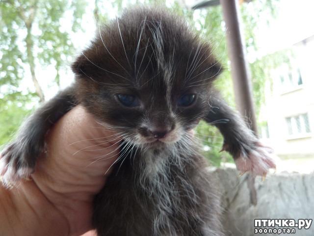 фото 6: КАК Я ПРОВЕЛА ЛЕТО или помощь кошке Снежке