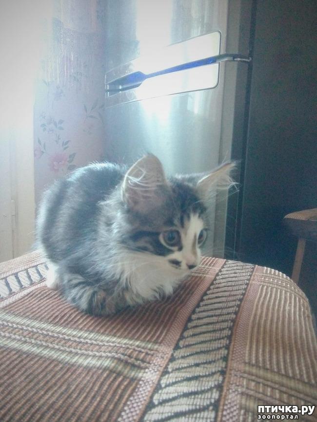 фото 12: КАК Я ПРОВЕЛА ЛЕТО или помощь кошке Снежке